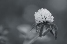 flower852-3
