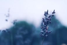 flower855-2