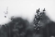 flower855-3