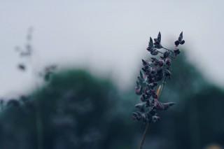 【高解像度】薄暗い雰囲気のミズカンナ(3パターン)