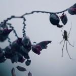 【高解像度】ミズカンナと蜘蛛(3パターン)