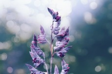 flower858-2