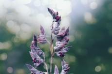 flower858