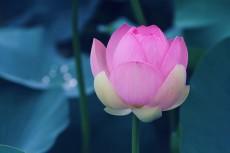 flower859-2
