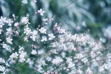 flower860