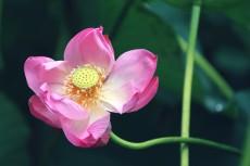 flower862-2