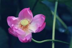 flower862