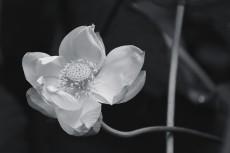 flower862-3
