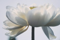 flower863-2