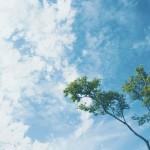 【高解像度】一本の木と空(3パターン)