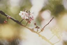 flower788