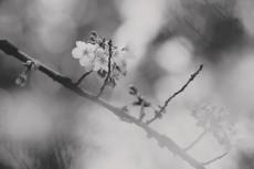 flower788-3
