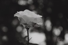 flower864-2