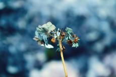 flower865-2
