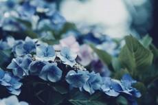 flower866-2