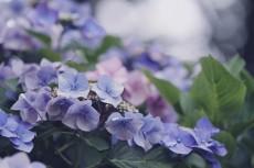 flower866