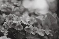 flower866-3