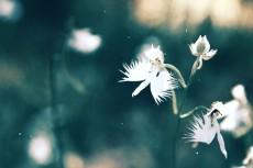 flower867-2