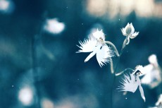 flower867