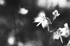 flower867-3