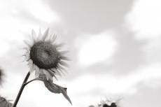 flower868-2