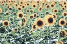 flower869-2