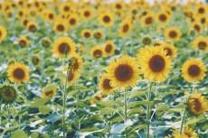 flower869