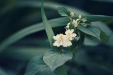 flower871-2