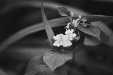 flower871-3