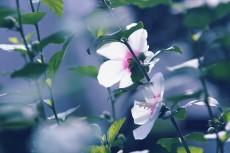 flower873-2