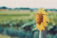 flower874-2
