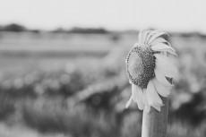 flower874-3
