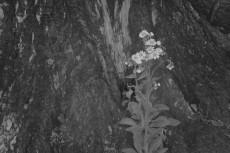 flower876-2