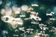 flower877-2