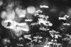 flower877-3