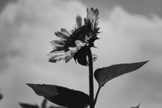 flower878-3