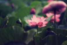 flower879-2