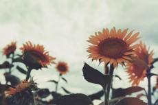 flower881-2