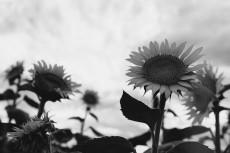 flower881-3
