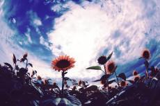 flower882-2