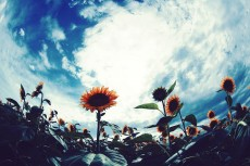 flower882