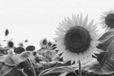flower883-3