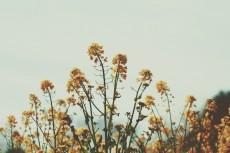 flower885-2