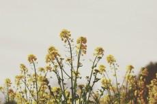 flower885