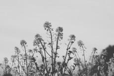 flower885-3