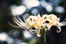 flower890-2