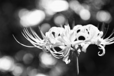 flower890-3