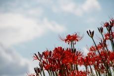 flower892
