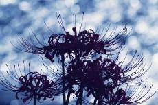 flower894-2