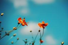 flower895-2